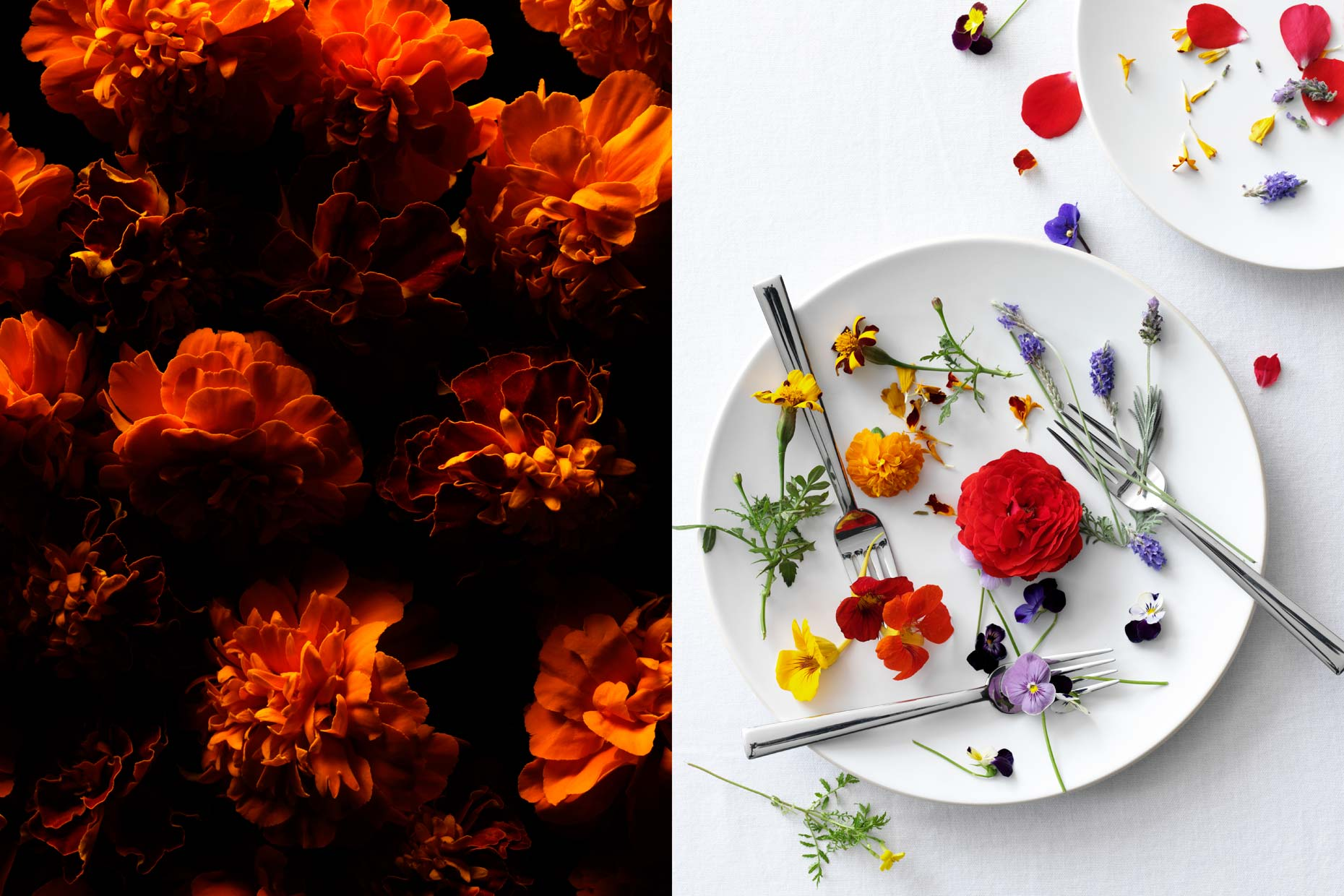 adrian_mueller_edible_flowers_01